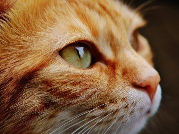 Der Katzenfutterautomat - eine Sorge weniger auf sparmunity.de